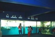 Tierpark Schönbrunn: Akustikputz